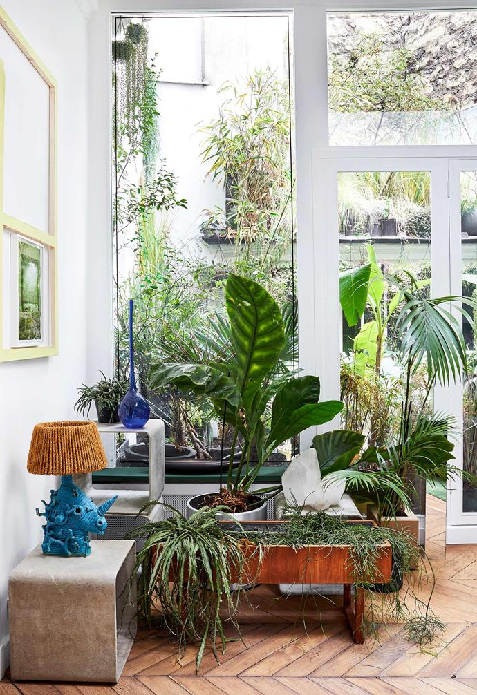 "**Urban life** [Indoor plants](https://www.homestolove.com.au/how-to-choose-the-ideal-indoor-plant-8814|target=""_blank"") play myriad roles in our abodes. From [purifying air](https://www.homestolove.com.au/the-10-best-air-purifying-plants-4501