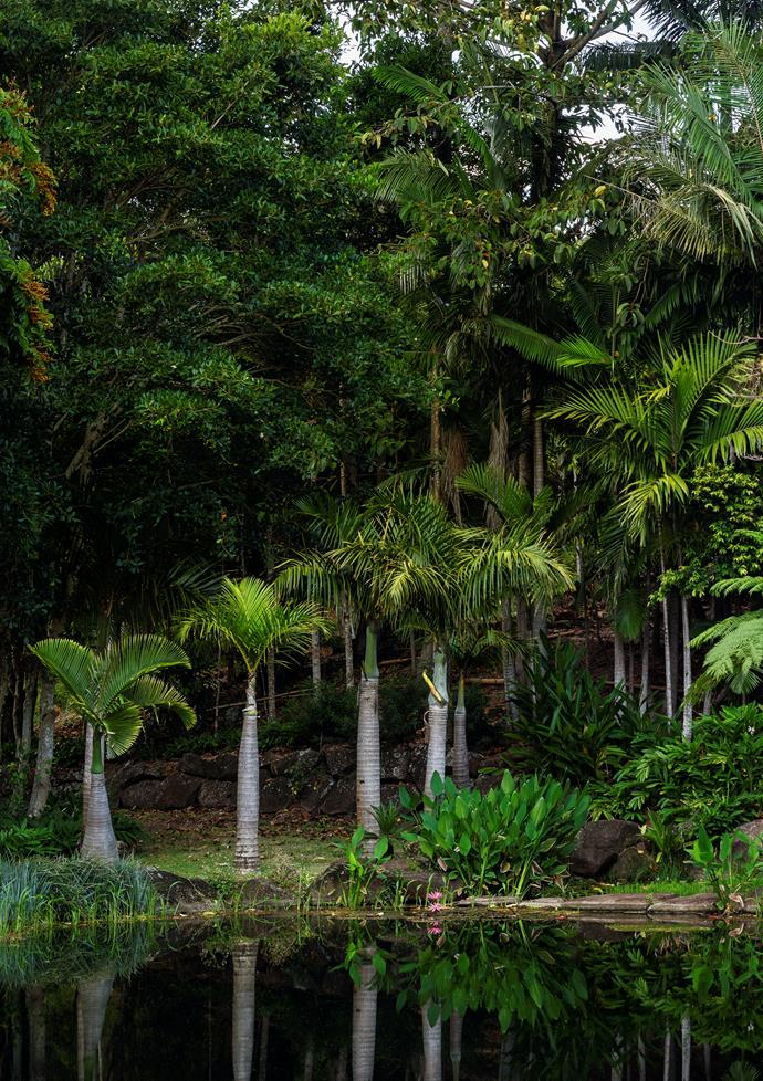 At the entrance, a mature screwpine (*Pandanus utilis*) was craned in and dwarf date palms (*Phoenix roebelenii*) and blue nolina (*Nolina nelsonii*) planted to provide verticality and soften the home's modern facade. Mass plantings of leopard plant (*Ligularia dentata*) and ornamental Korean velvet grass (*Zoysia tenuifolia*) provide dense ground cover.