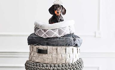 12 most stylish dog beds for all breeds