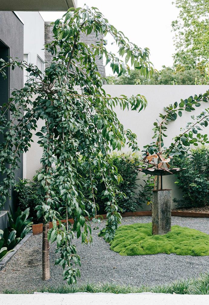 Diverse plantings, chosen by landscape designer Inge Jabara include Japanese maple, smoke bush and orange jasmine plus mini mountains of lime lava that surround the bird bath.