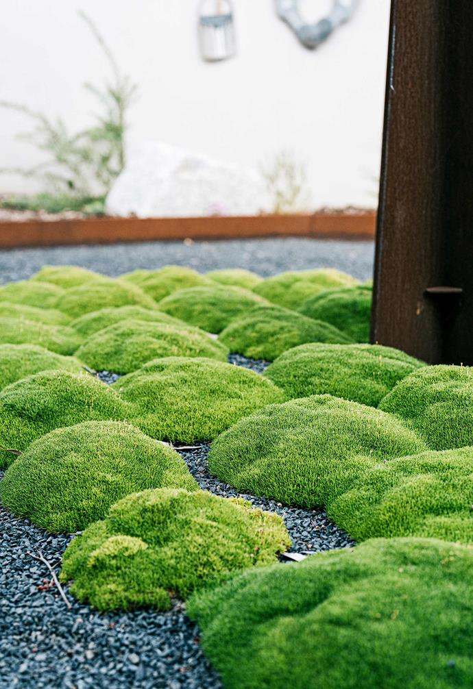 Lime lava aka Canberra grass provides intriguing clouds of greenery in the centre of the larger courtyard.