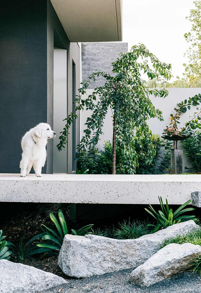 Smoosh guards the entry, with the weeping fig and bird bath in the smaller courtyard behind him. Bush lilies and giant mondo grass occupy the shaded area below the bridge.
