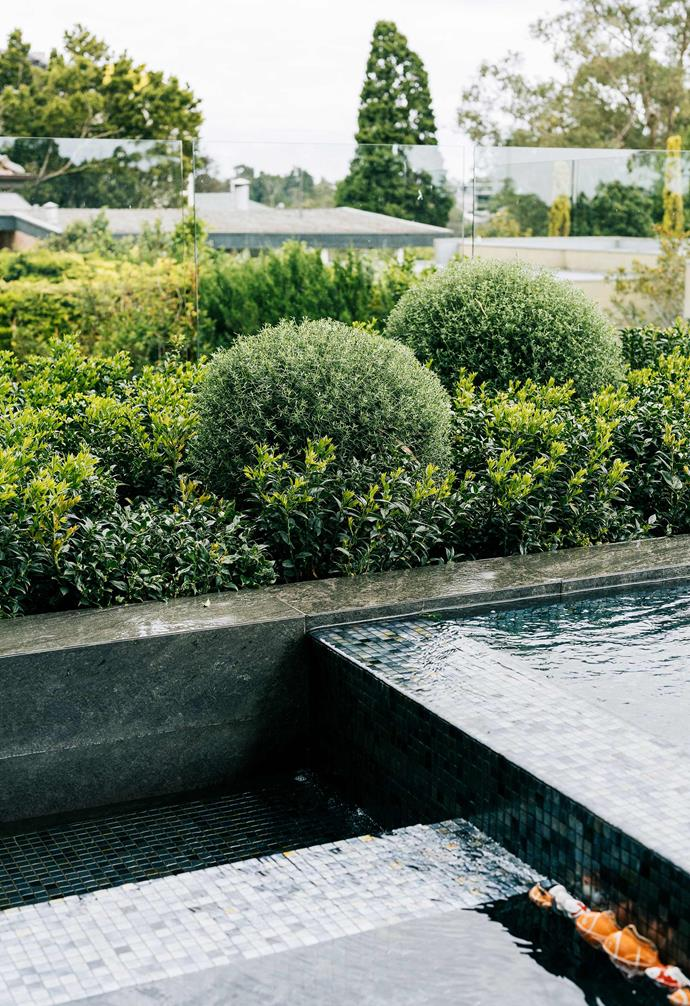Coastal rosemary and Ruscus edge close to the mosaic-tiled pool by Panoramic Pools.