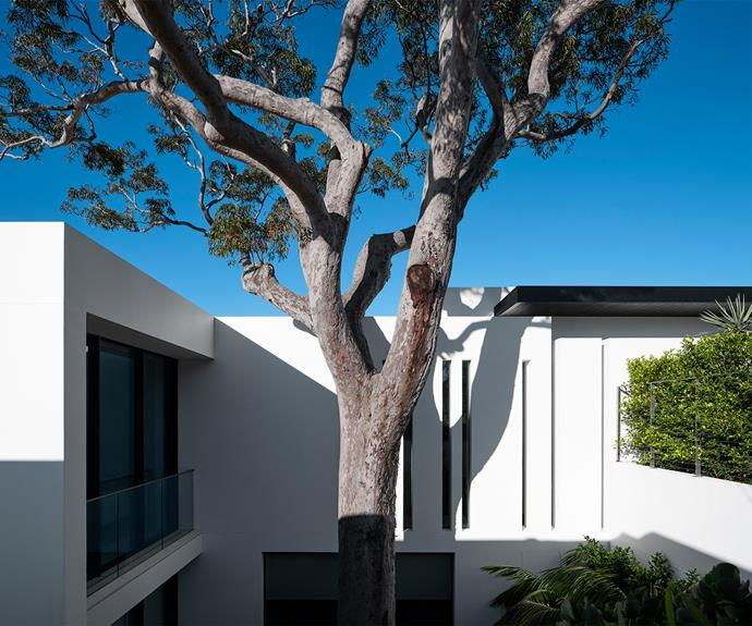 """""""The floor plan of the house is notched around the existing tree with large windows to allow natural light to flood inside,"""" says architect Phillip Mathieson. That tree presented both a challenge and an opportunity to craft a site-specific design."""