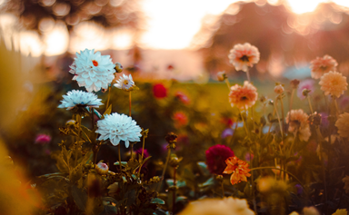 4 of the best flowers for autumn