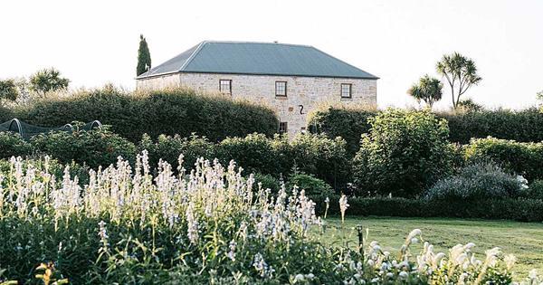 Explore the formal lavender garden at The Granary, TAS