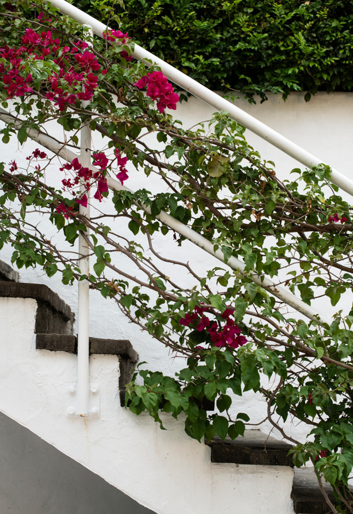 The steps down to the Mediterranean courtyard are covered in bougainvillea vines.