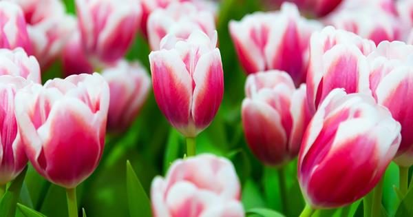 When to plant bulbs for year-round colour