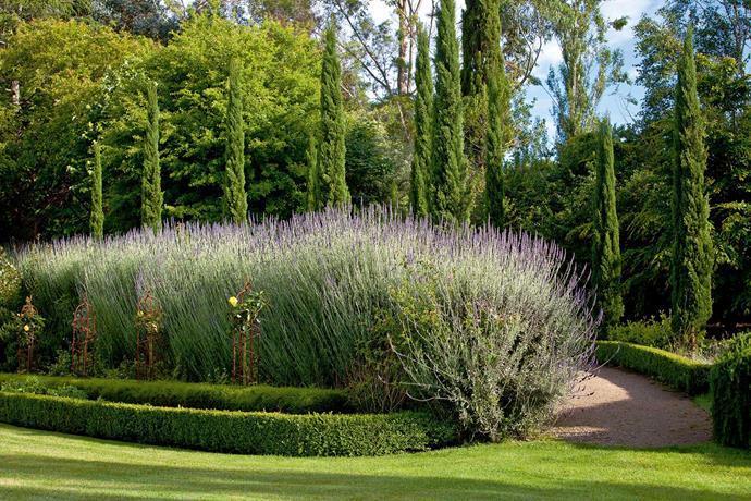 Lavender thrives in the seaside air of Flinders.