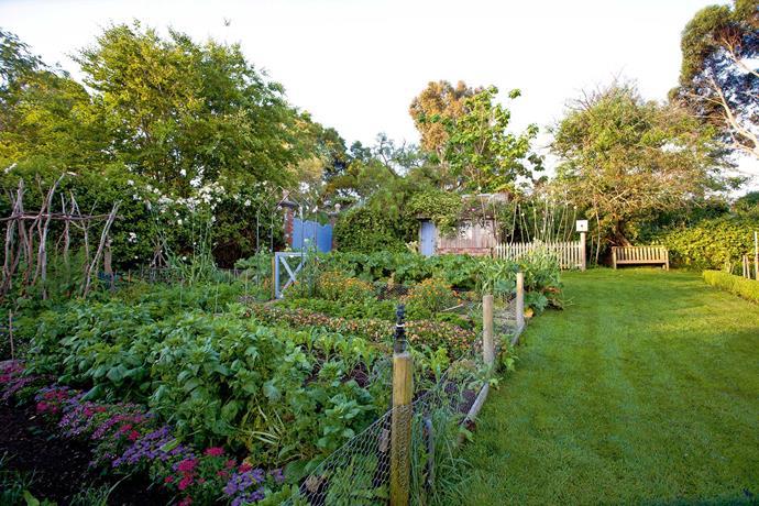 The tidy vegetable garden.