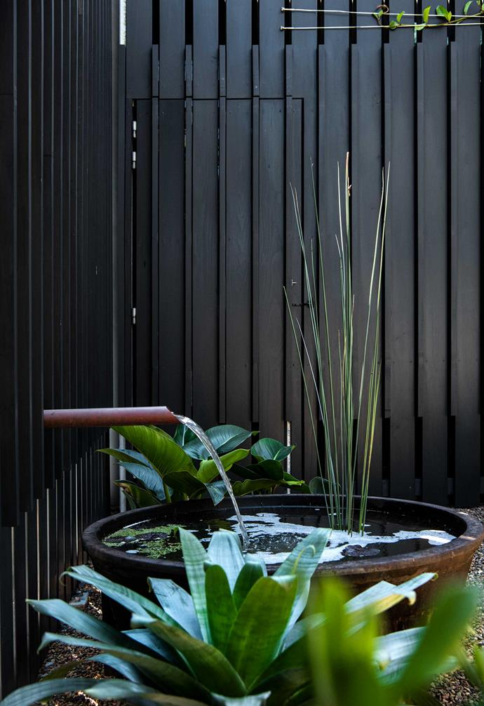 """The fish pond water feature adds a beautiful soft element to the courtyard of this [modern home](https://www.homestolove.com.au/modern-house-booker-bay-20437