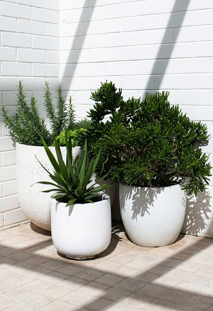 """Pots from [Koskela](https://koskela.com.au/