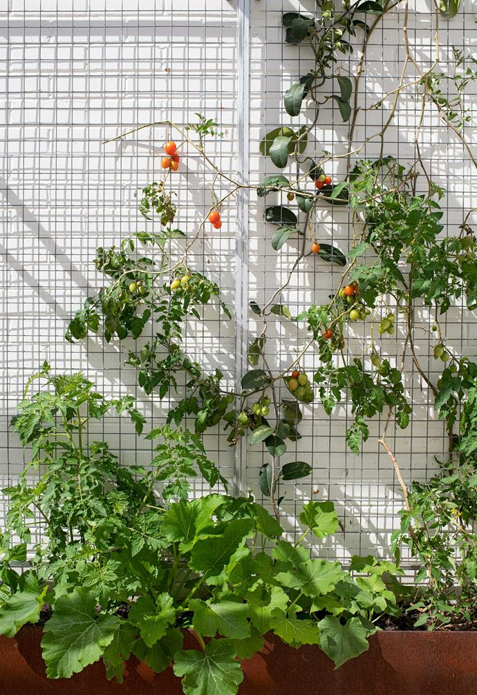 """In the kitchen garden, assorted vegies occupy a weathered Birdies iron trough from [Bunnings](https://www.bunnings.com.au/