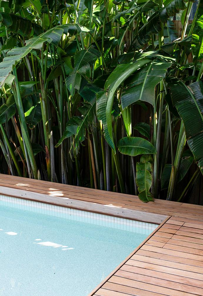 Timber and tile used for the pool area are a study in contrasts, the former treated to withstand pool-water splashes and the rigours of the weather. Just as hardy and striking is the *Heliconia pendula* in the garden immediately behind.