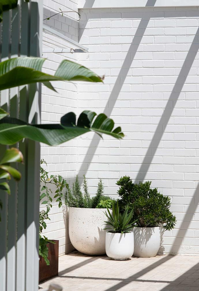 """Basking in sunshine, this secluded corner of a Sydney garden is the perfect spot for growing herbs and vegetables and drying the constant loads of washing that a family of four churns out. Centre of the frame are pots from [Koskela](https://koskela.com.au/