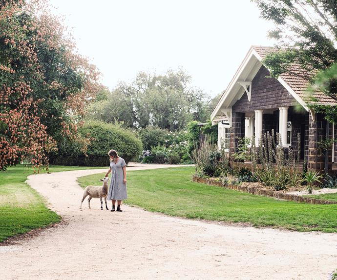 Woman with lamb walking on a gravel driveway near a Bluestone homestead