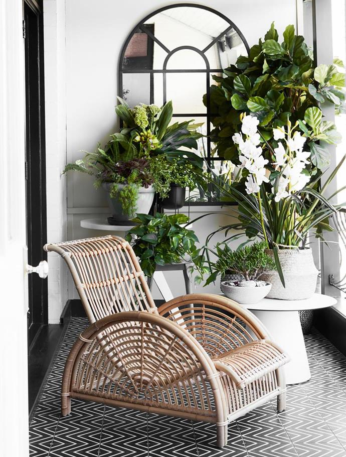 """Succulents and other shade-loving plants thrive in this [grand Sydney home](https://www.homestolove.com.au/grand-sydney-home-with-gorgeous-refresh-20706