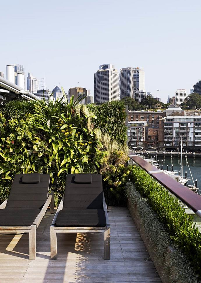 """Self-irrigating green walls add to the sense of calm on the balcony of [John McGrath's luxurious Sydney harbour apartment](https://www.homestolove.com.au/gallery-john-mcgraths-luxe-sydney-harbour-apartment-1465