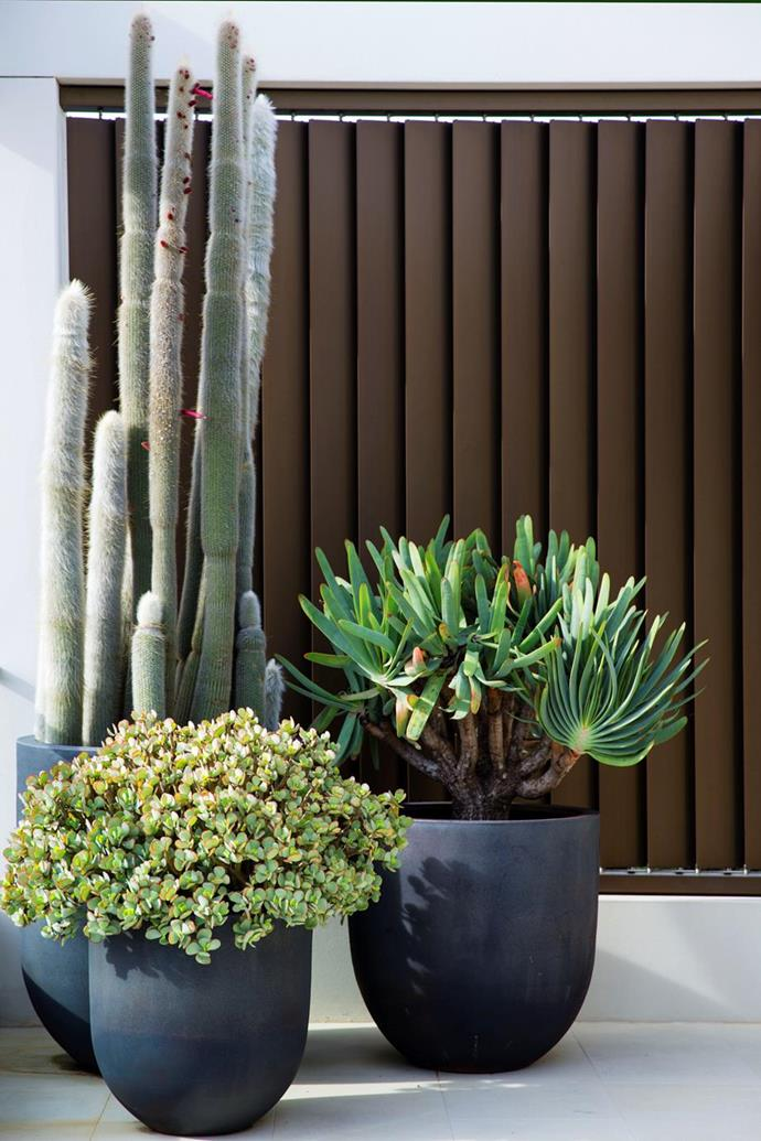 Plants in various sizes and shapes add visual interest. This garden has matured into the soothing retreat its designer had envisioned.