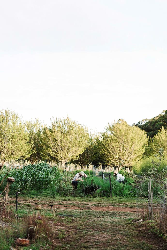 The farm has two hectares of vegetable, herb and flower gardens.