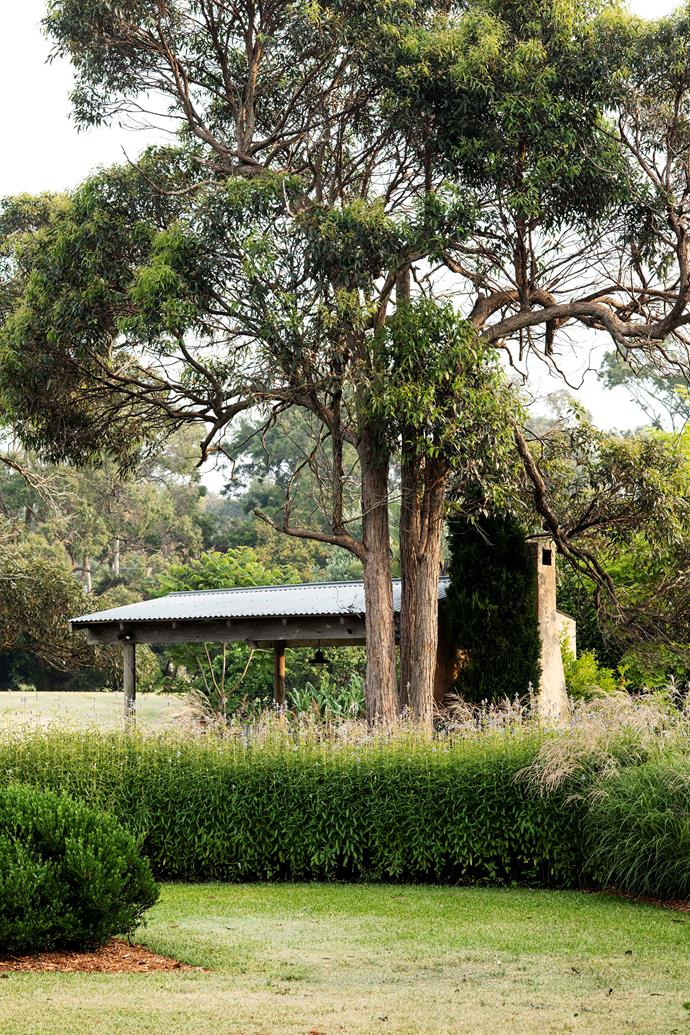 Delicate blue salvia flowers waft in the breeze beneath mature eucalypts in this garden at Wamberal.