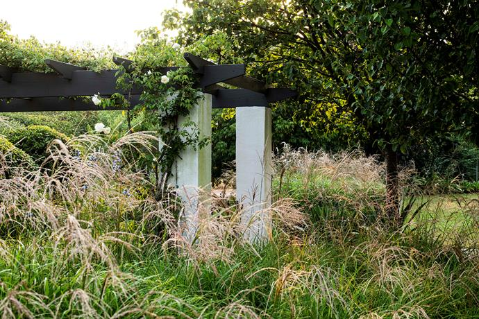 Feathery grass heads surround the pergola decorated with the pretty climbing Lamarque rose.