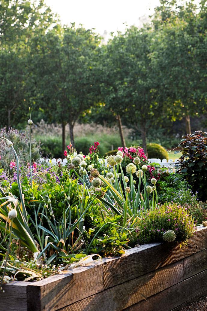 "[Raised garden beds](https://www.homestolove.com.au/raised-garden-beds-9873|target=""_blank"") make it easy to grow and harvest vegetables."