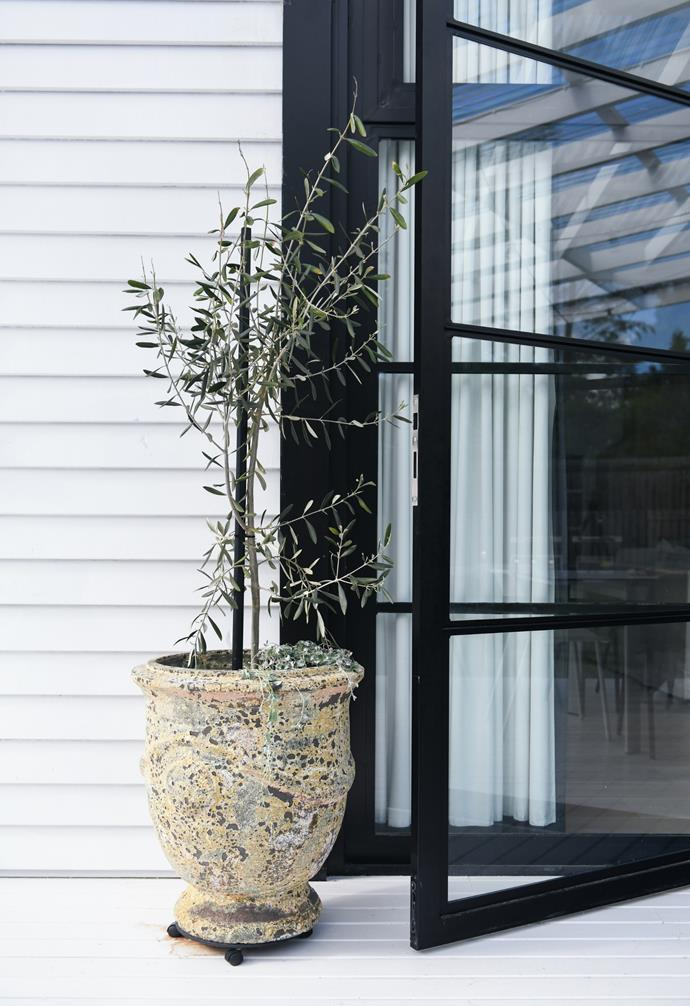 """The [olive trees](https://www.homestolove.com.au/potted-olive-trees-21915