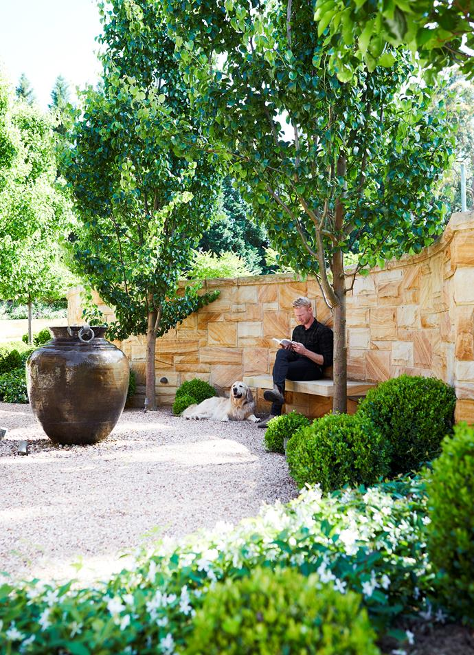 Garden designer Matt Hook and his dog Bob sit on a sandstone bench opposite the front portico. Two ornamental pear trees (Pyrus calleryana 'Capital') stand either side of the bench; Japanese star jasmine and clipped balls of Japanese box encircle the gravel.