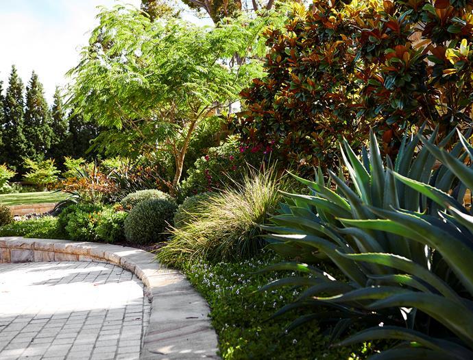 Agave desmettiana, Magnolia 'Teddy Bear' and Lomandra 'Tanika' are among the contrasting foliage textures.