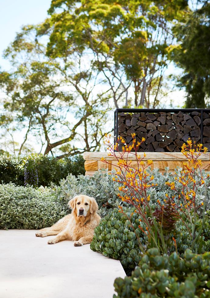 Golden retriever Bob is totally at home nestled into the fabulous foliage of this garden in Sydney's north-west. Turn the page to see more of this sprawling wonderland.