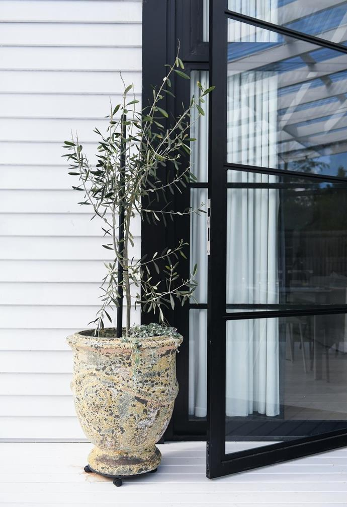 """Two potted olive trees stand guard on the back entrance of this [dignified cottage in Leura](https://www.homestolove.com.au/stylish-white-weatherboard-cottage-leura-22479