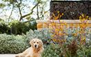 A sprawling, lush garden fit for a multigenerational family home