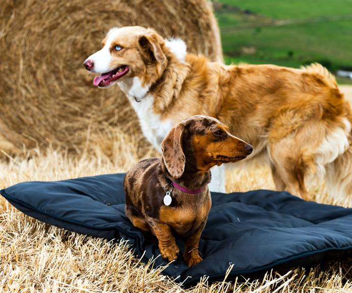 """**[Pure wool washable pet bed, $99 (Large), Aussie Wool Comfort](https://www.aussiewoolcomfort.com.au/product/pet-bedding/
