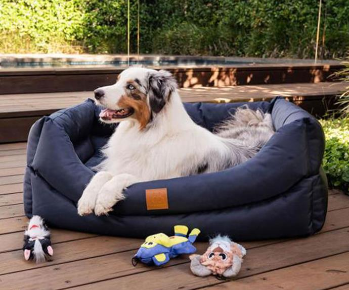 Dr Carr recommends a waterproof bed with self-warming properties for dogs who spend most of their time outdoors.