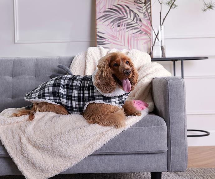 """**[Tails plaid pet jacket knit in black and white, $15, Big W](https://www.bigw.com.au/product/tails-plaid-pet-jacket-40cm-black-white/p/138953/