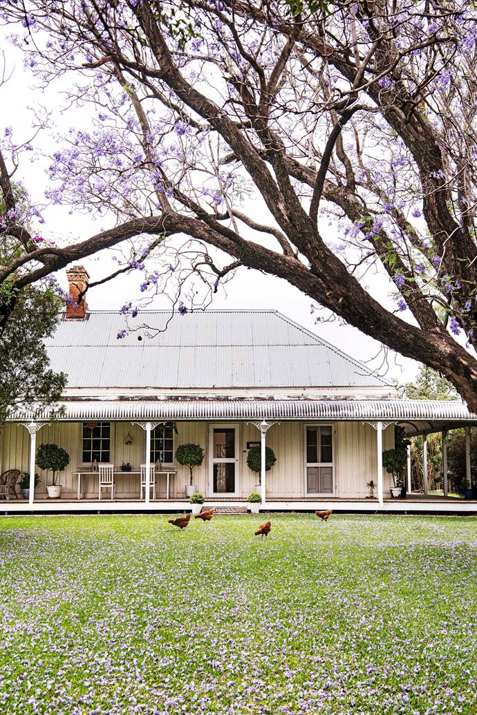 The home is framed by the jacaranda.
