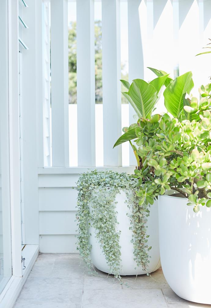 Trailing plants and succulents adorn large white pots by the back door.