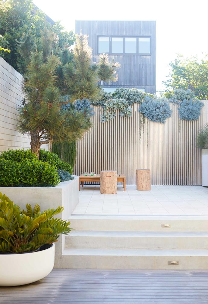 """The courtyard sits on two defined levels, zoning the dining area abutting the house and the seating area near the back boundary. Mrs Frankenstool seats, [Robert Plumb](https://robertplumb.com.au/ target=""""_blank"""" rel=""""nofollow""""). Nomah table, [Eco Outdoor](https://www.ecooutdoor.com.au/ target=""""_blank"""" rel=""""nofollow"""")."""