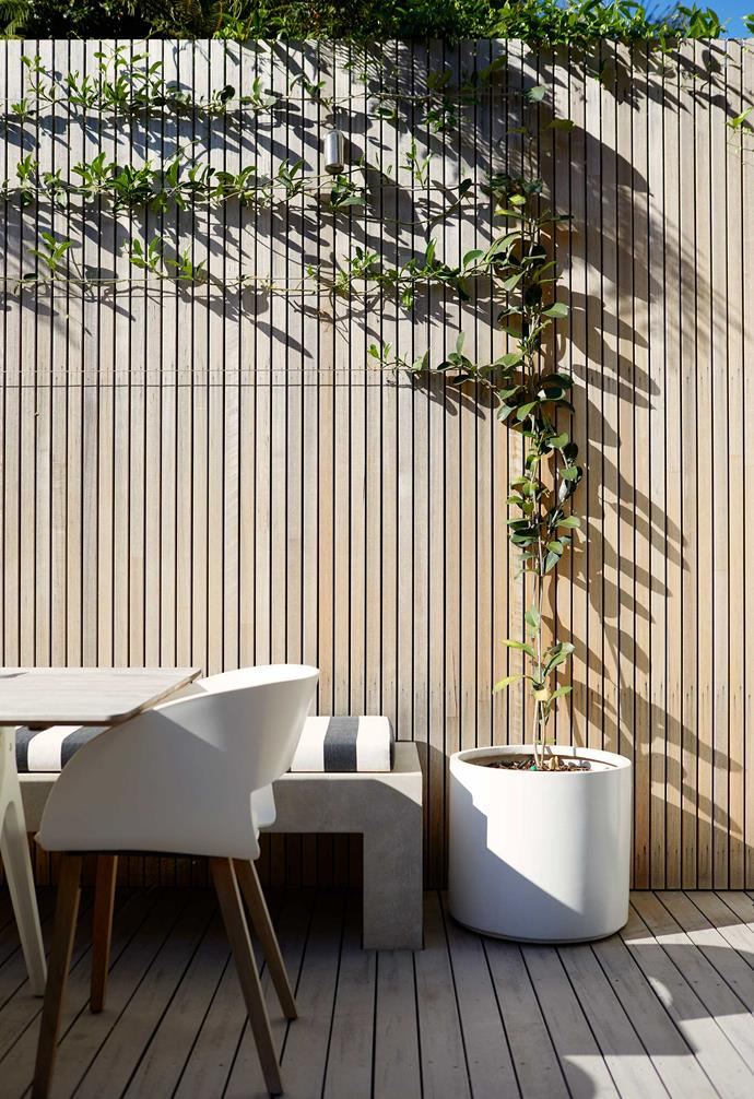 """Wide-gauge waterproof decking in Silver Gum from [ModWood](https://www.modwood.com.au/ target=""""_blank"""" rel=""""nofollow"""") contrasts with the wall. Madagascar jasmine in an Apollo cylinder planter from [Garden Life](https://gardenlife.com.au/ target=""""_blank"""" rel=""""nofollow"""") is espaliered along the fence."""