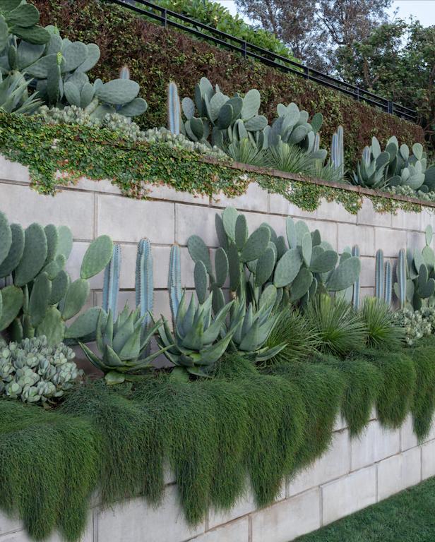 "Limelight elegantly cascades down a wall in this [coastal garden](https://www.homestolove.com.au/sculptural-seaside-garden-sydney-21397 target=""_blank"")."