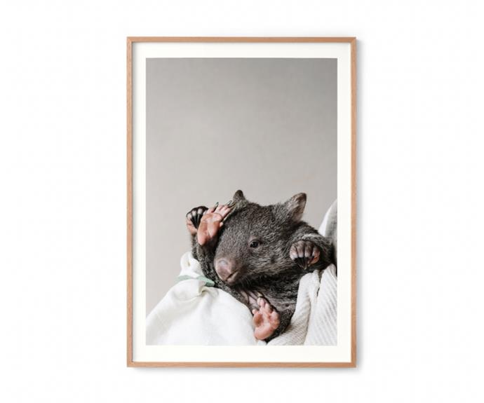 """**[Kate the Bare Nosed Wombat (Prints for Wildlife) by Marnie Hawson, $350, Marnie Hawson](https://www.marniehawson.com.au/print-shop/p/prints-for-wildlife-kate-the-bare-nosed-wombat-for-the-emerald-monbulk-wildlife-shelter