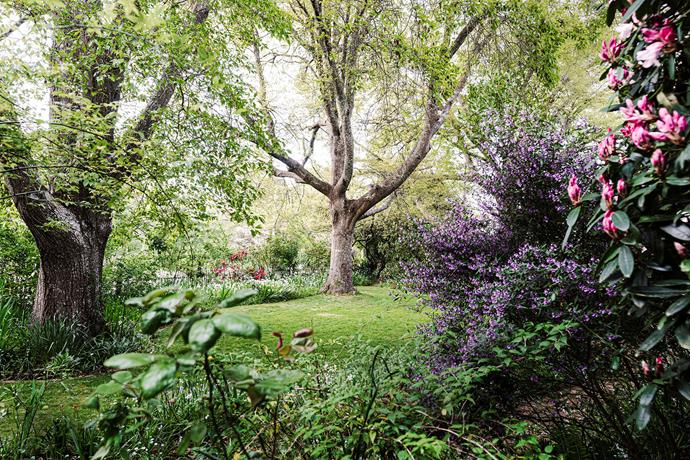 Jenny and John Shaw's garden in Woodend, Victoria is home to this rare Quercus 'Macedon' (left), also known as Quercus 'Firthii', as well as an English oak (centre).