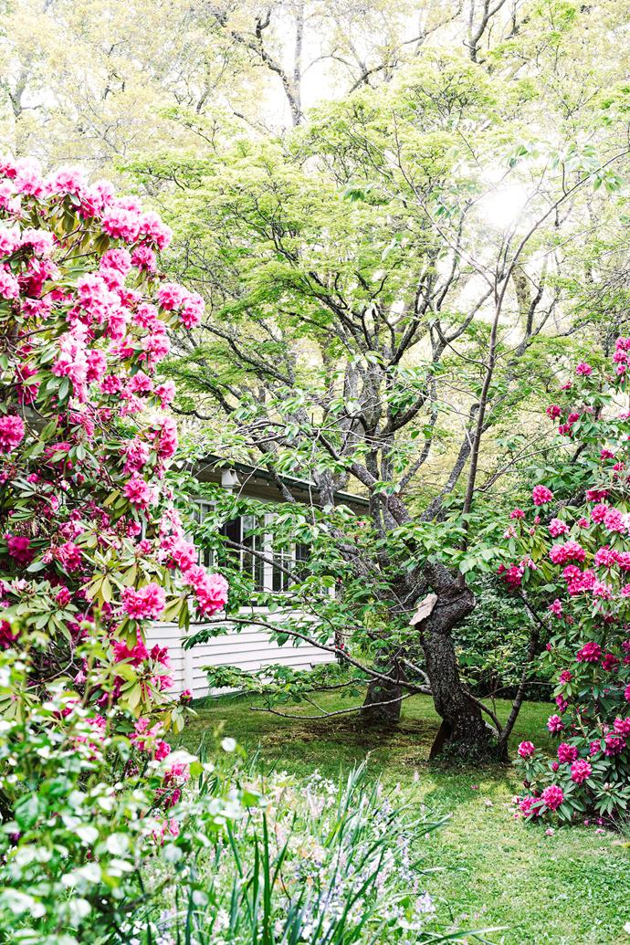 """The rhododendrons that frame the view to this 1920s cottage are between 30 to 60 years old. But they're not even the oldest inhabitants of this [cottage style flower garden](https://www.homestolove.com.au/cottage-flower-garden-woodend-vic-22526