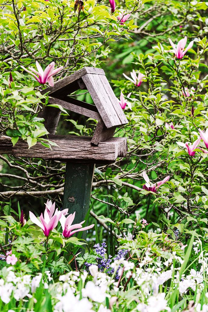 A homemade bird house engulfed by a magnolia tree in Woodend, VIC.