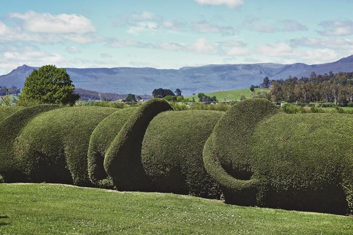 The elephant hedge is Old Wesleydale's best-known feature.