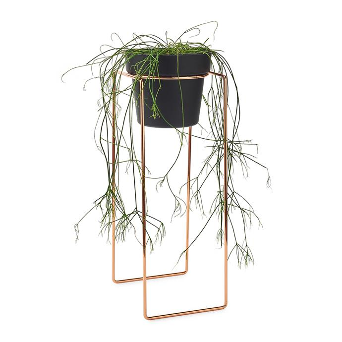 """**Bendo Imbiza Metal Plant Stand with Pot, $124, [Temple & Webster](https://www.templeandwebster.com.au/Imbiza-Metal-Plant-Stand-with-Pot-PST-BEND1014.html?refid=GPAAU447-BEND1014_200387900&PiID%5B%5D=200387900#view-image