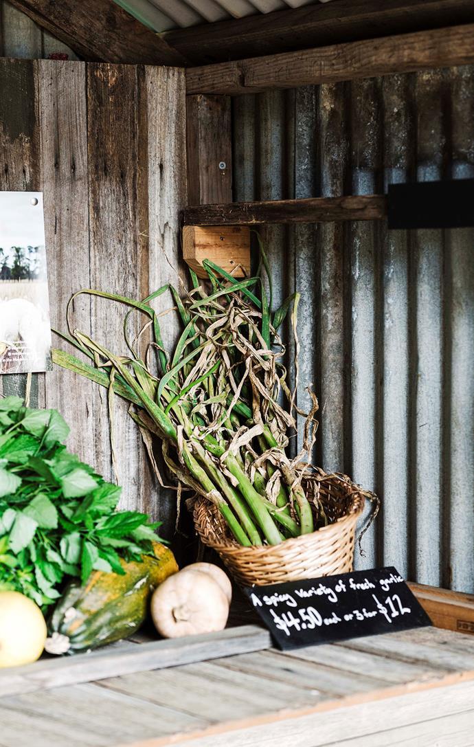 Fresh garlic for sale.