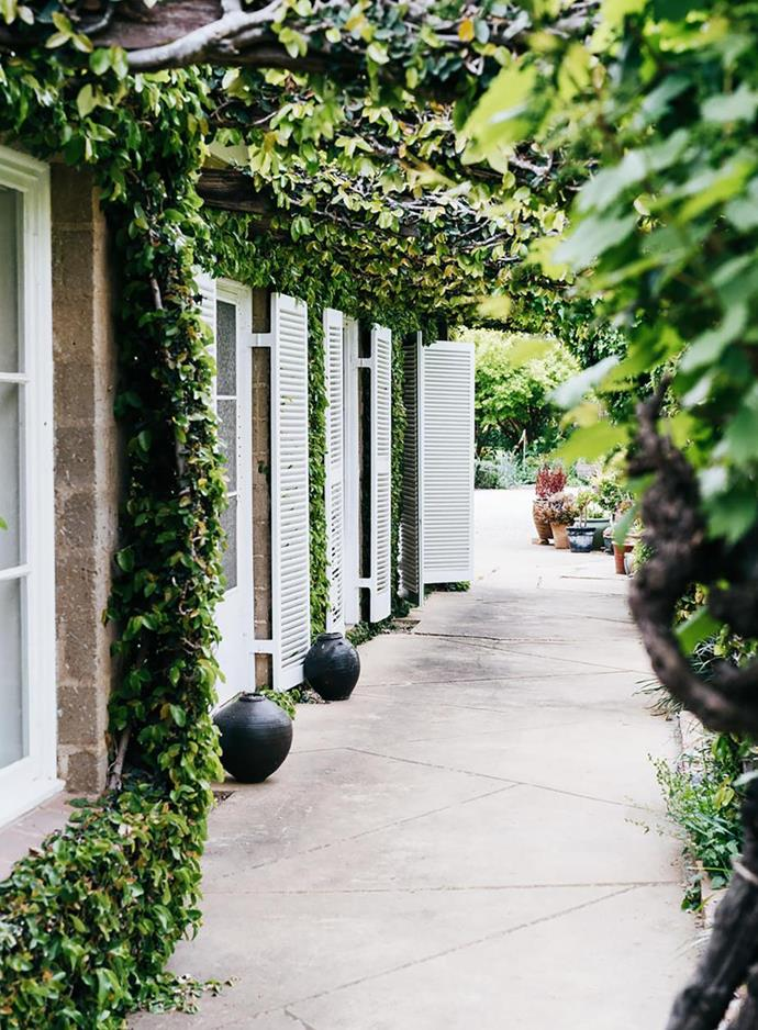 """Creeping fig climbs over the pergola beams that connect the home to this [winery's garden in Victoria](https://www.homestolove.com.au/tahbilk-winerys-gardens-victoria-21128
