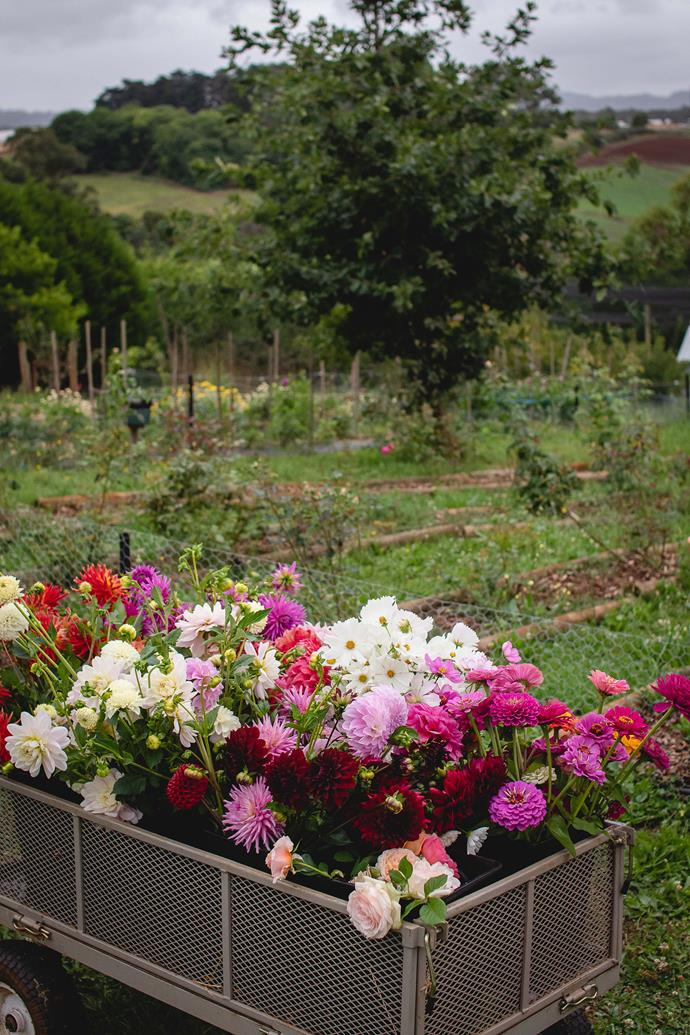 Freshly harvested flowers including dahlias and roses.